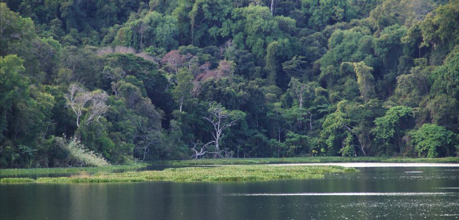 La faune de la forêt pluviale