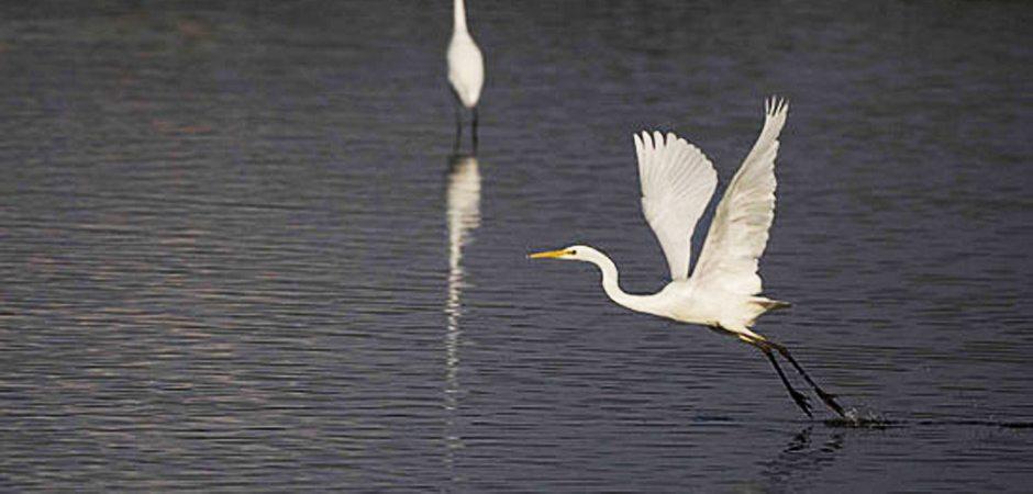 La faune des lacs fleuves et rivières