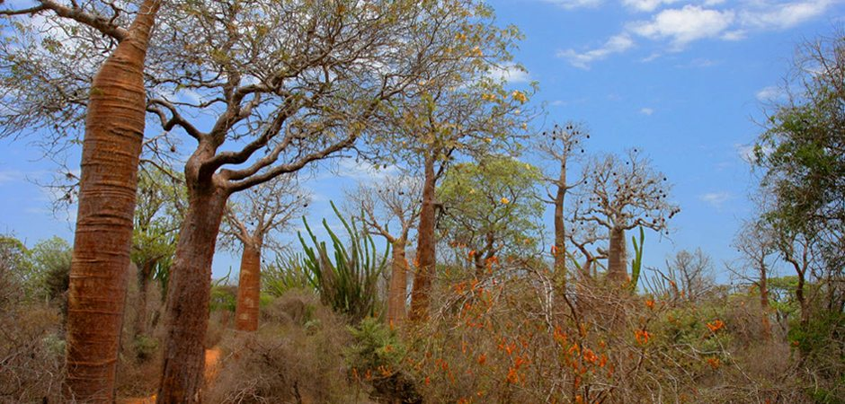 La faune du bush malgache