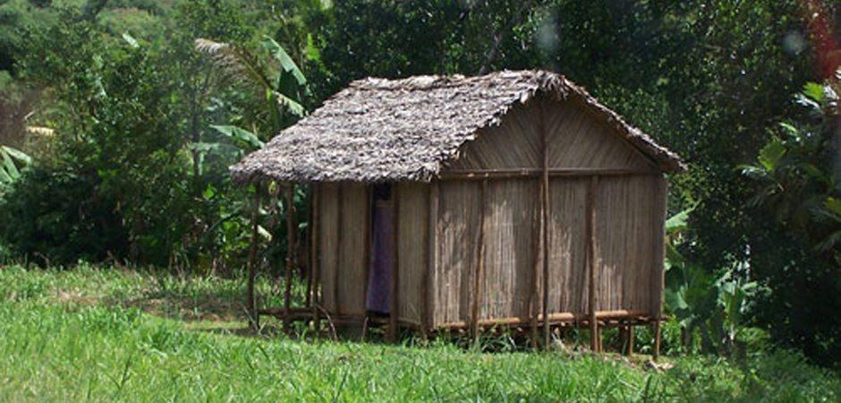 Habitat – une architecture végétale