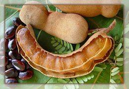 Des fruits de Tamarinier
