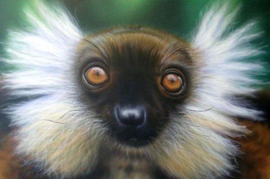 lemurien allocebe