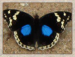 magnifiques papillons dans le parc