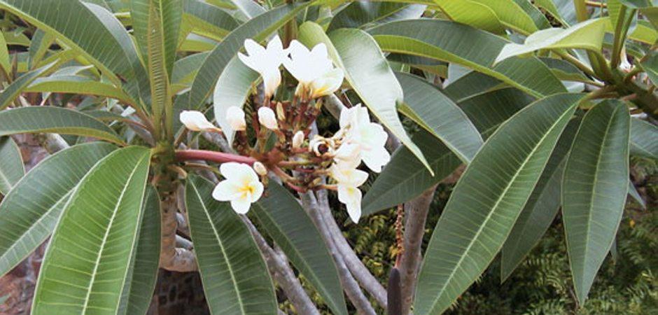 Flore et Pharmacopée traditionnelle