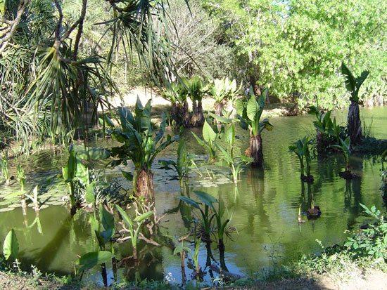 Plante à Madagascar