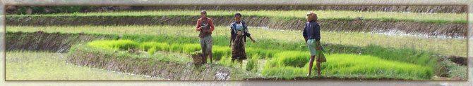 Travail Communautaire Malgache
