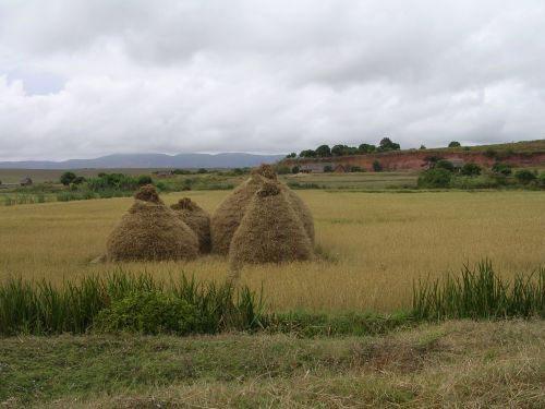 Alaotra : le grenier à riz de Madagascar