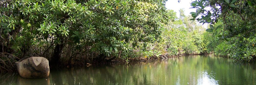 slide-madagascar-riviere-en-foret